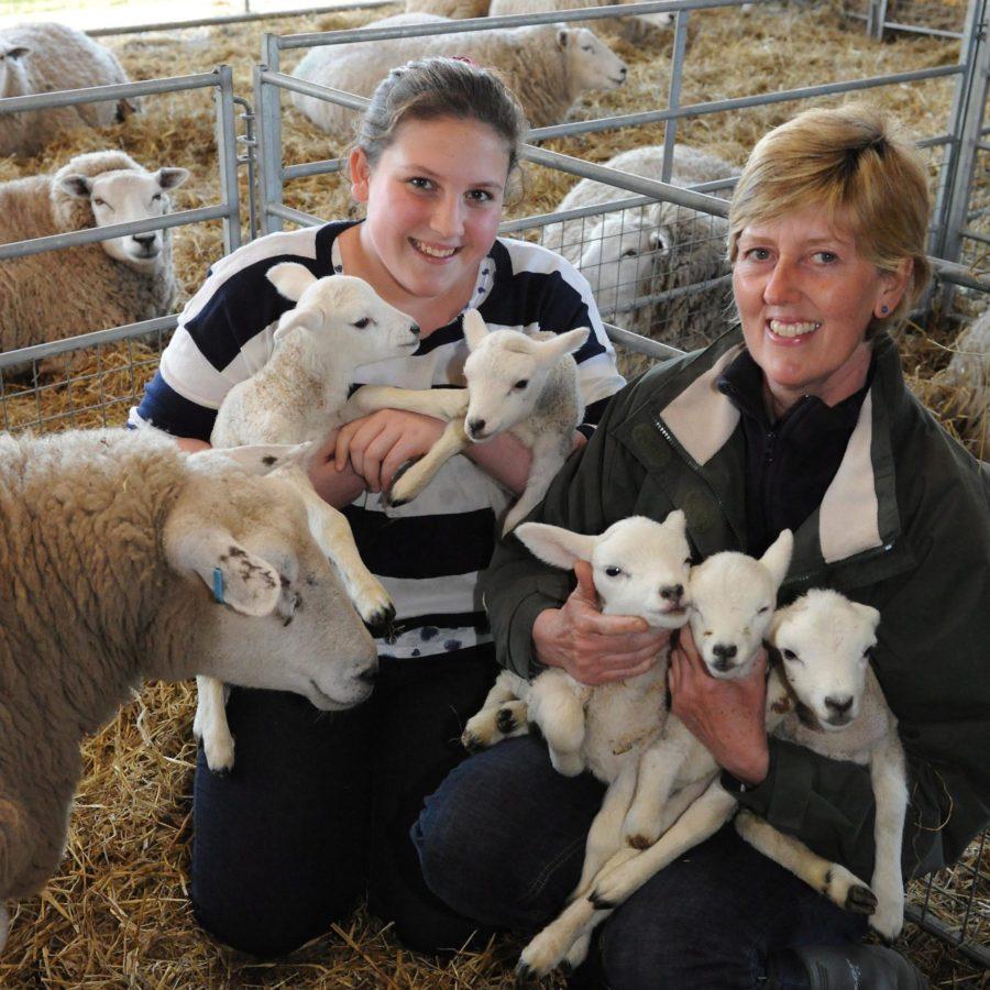 Jenni Liddiard Field Farm A day in the life of a Jersey Entrepreneur
